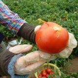 鮮度で味はどう変わるのか、野菜とブルーベリーを収穫してその場で食べてみた