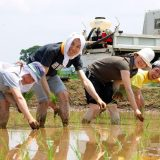 お米になるまでをよく知らないので田植え体験してみた