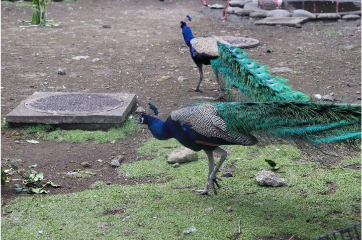 大島動物園