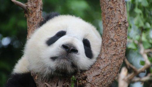 パンダのシャンシャンに会いに行こう!ひとり上野動物園のススメ